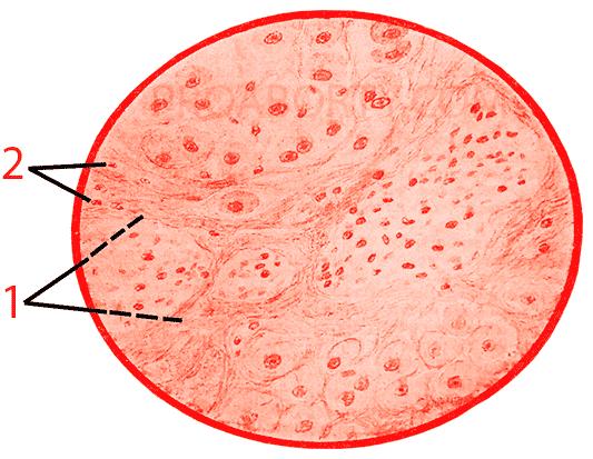 Волокна фиброзной ткани картинка